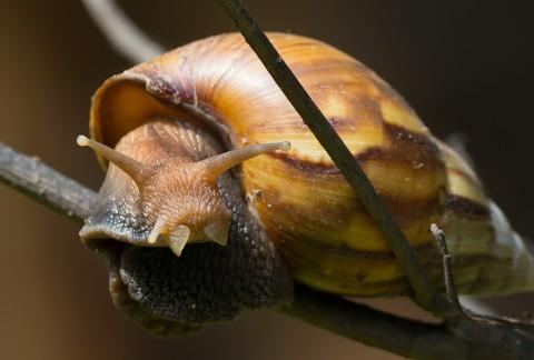 giant snail 2